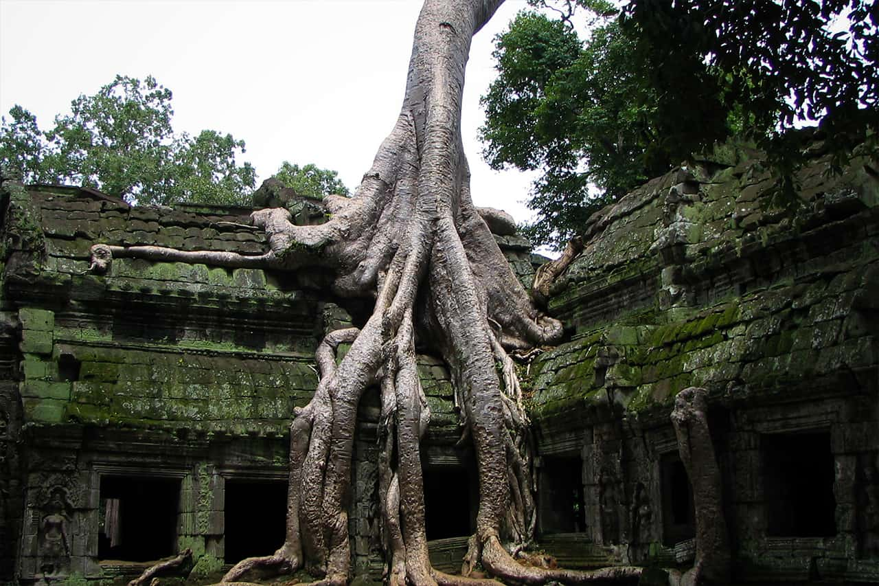 All About Ta Prohm Temple – The Tomb Raider Temple